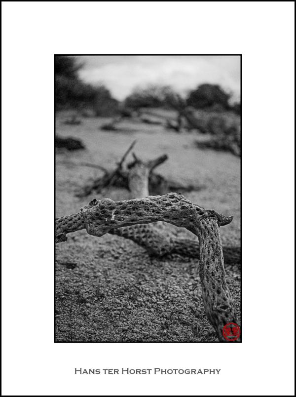 Cactus remains