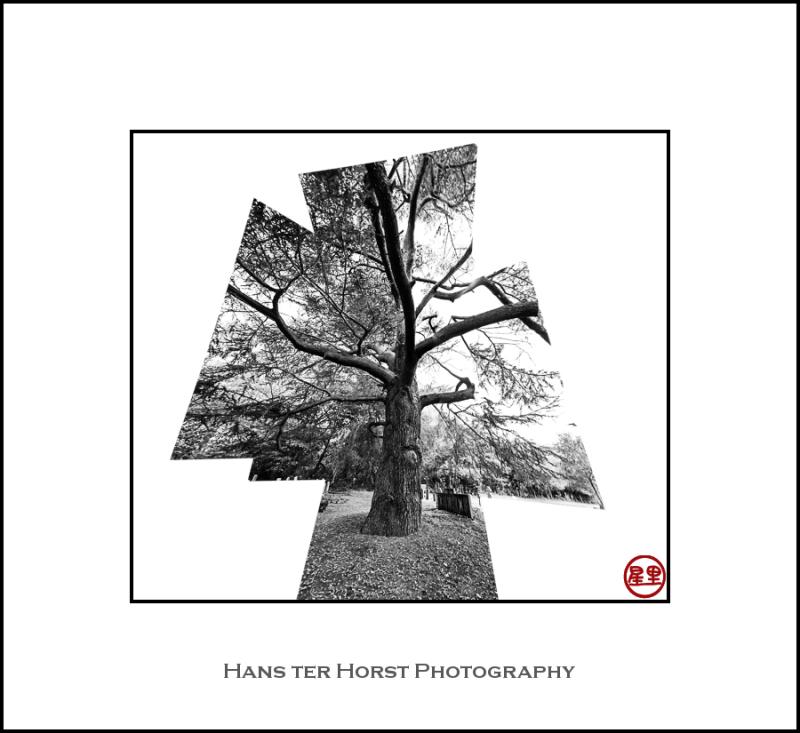 Tree, deconstructed