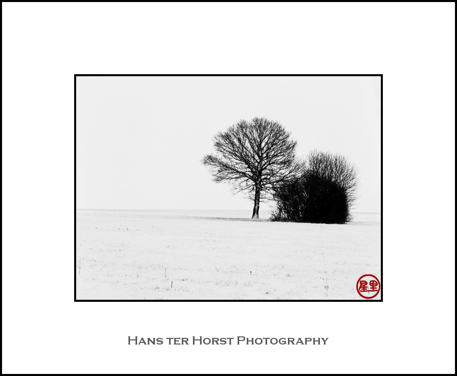 Trees in fields of snow