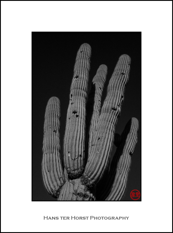 Saguaro and red filter