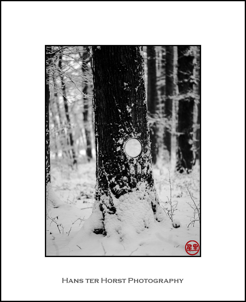 Snowy forest with mirror