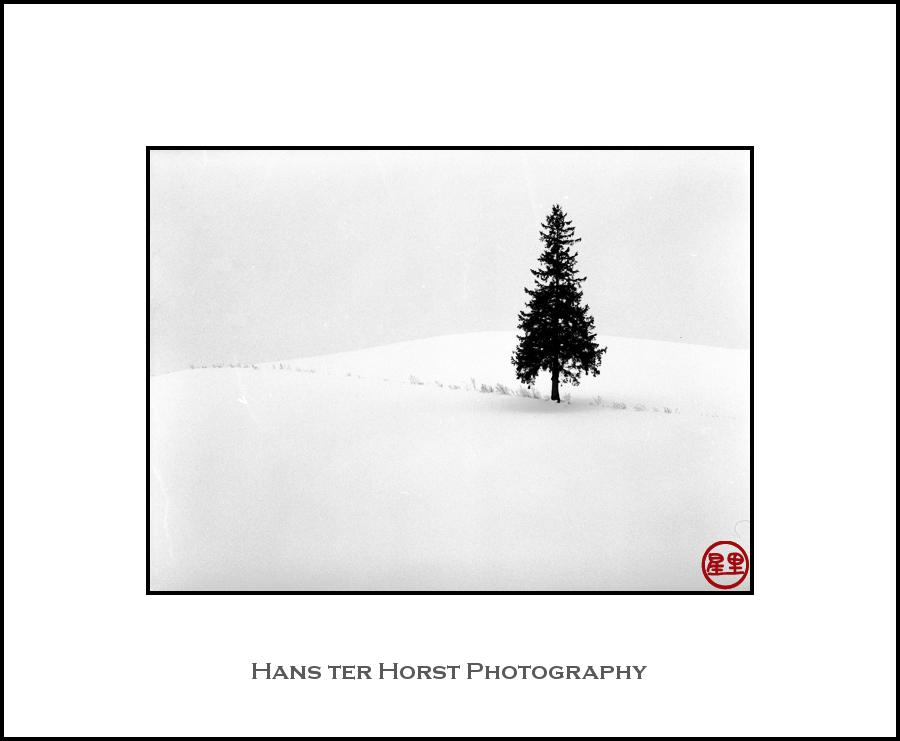 Christmas Tree, Biei, Hokkaido