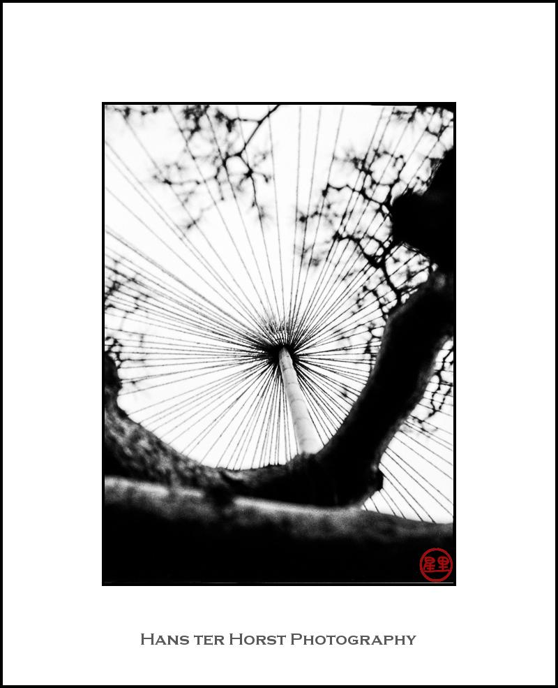 Yukitsuri on a tree in Nagano