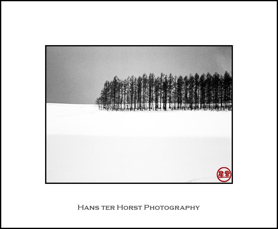 Hokkaido: snow and trees
