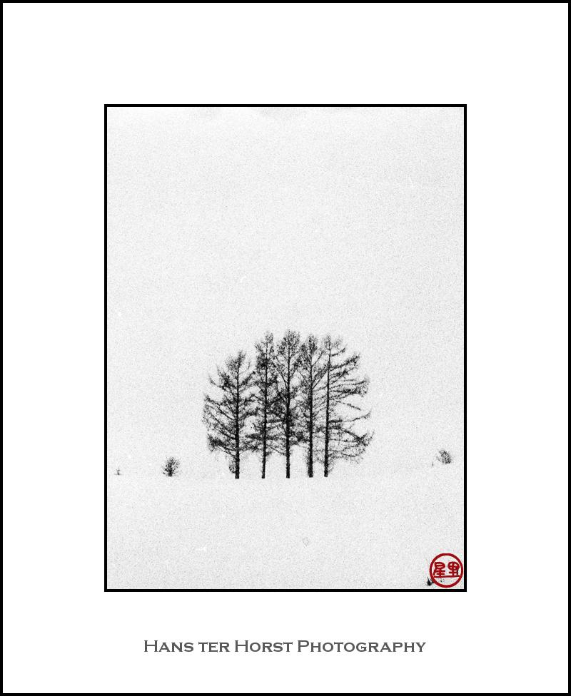 Trees, snow, sky