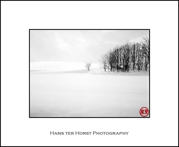 Snow and trees, Hokkaido