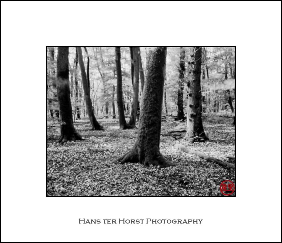 Pinhole: forest