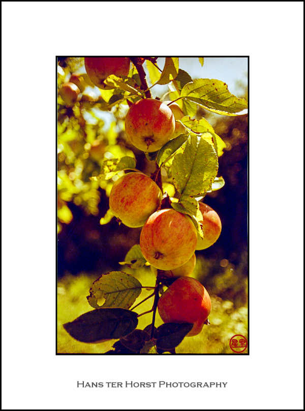 Apples on redscale film