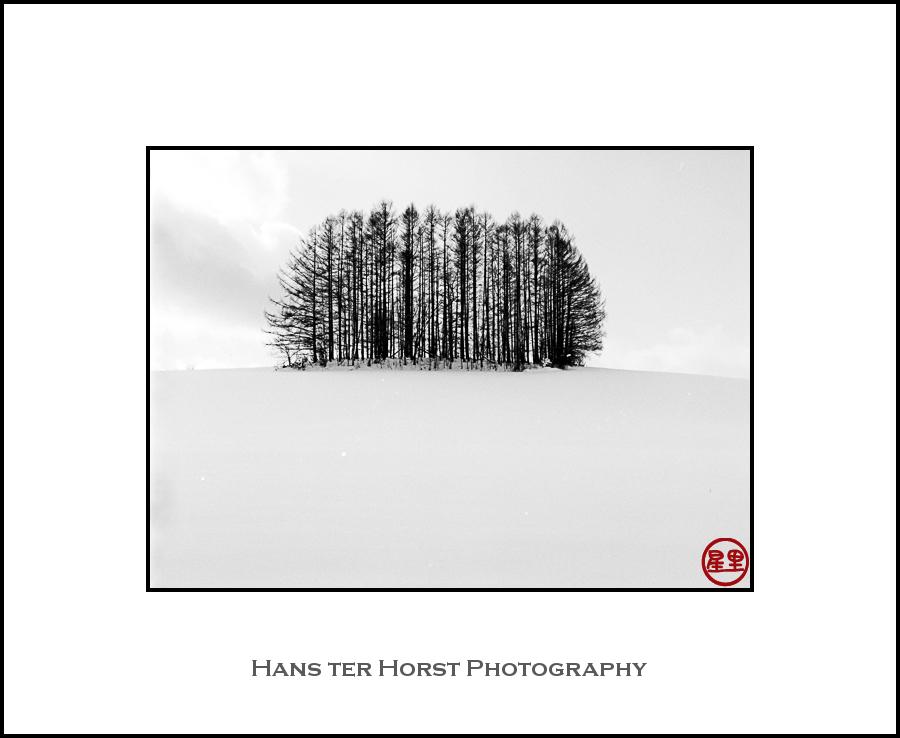 Biei, trees and snow