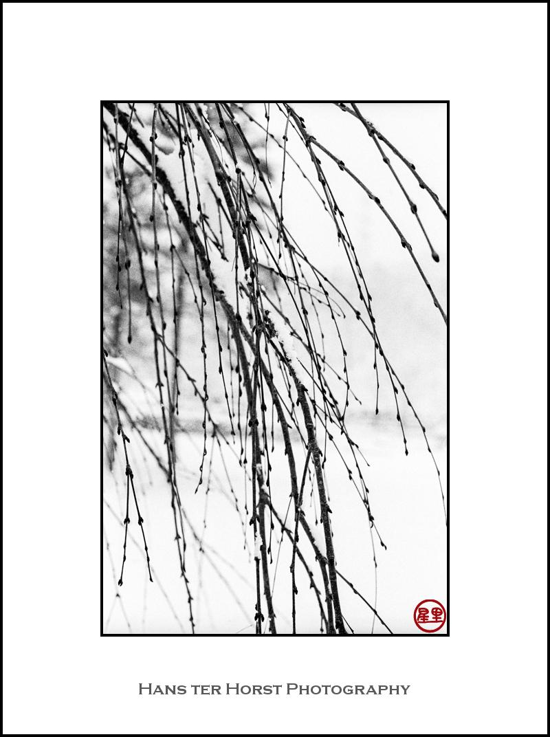 Willow in Hanamaki