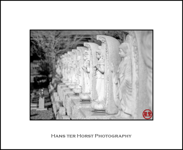 Lots of Buddha statues