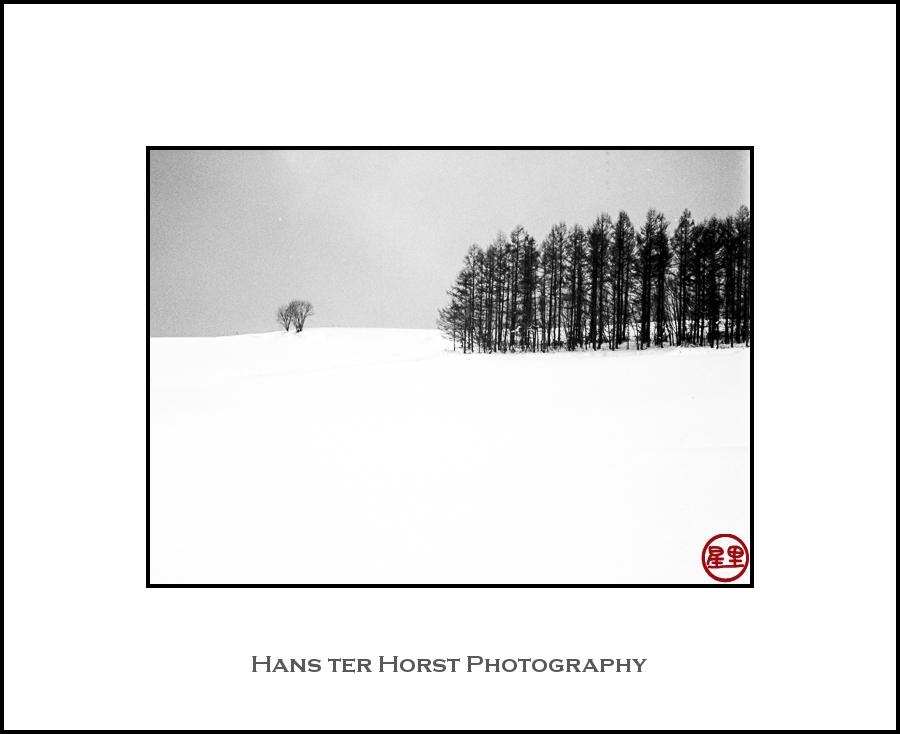 Hokkaido's trees