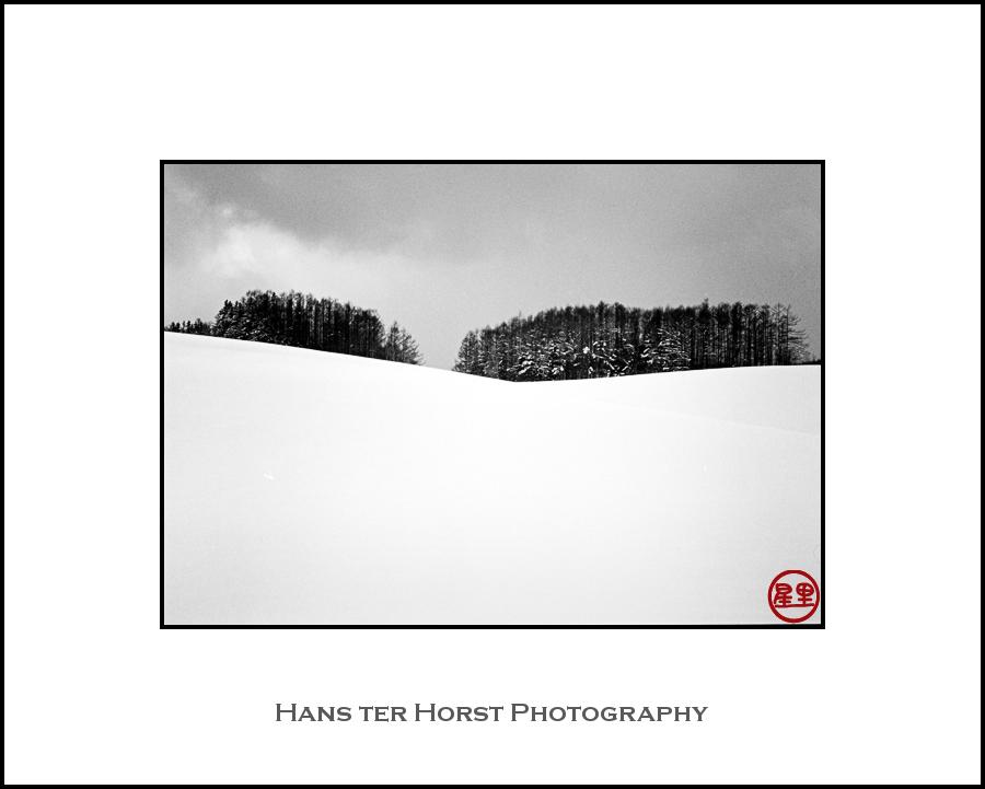 Trees of Hokkaido
