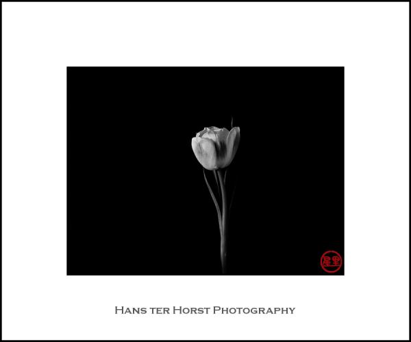 Spring time, tulip time