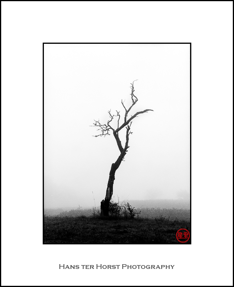 Fruit tree, the the fog
