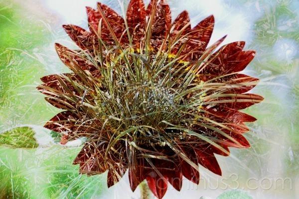 grassflower
