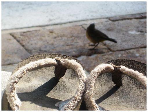 A little bird..