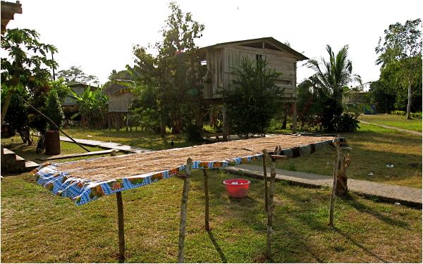 Drying rice