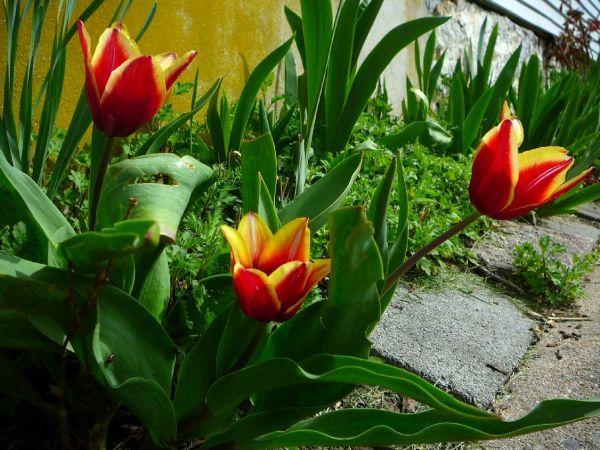 Remebering Spring