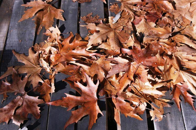 Autumn(1)