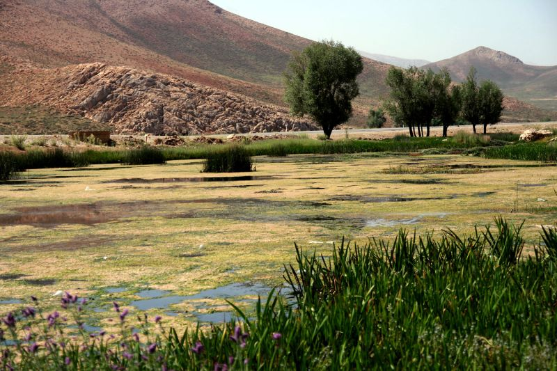 Dimeh Spring(2)