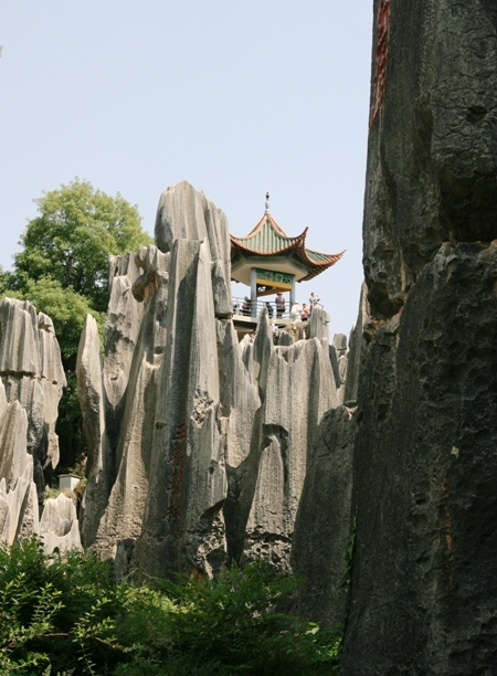 Stone Forest (3)