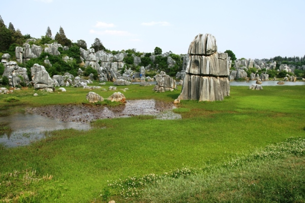 Stone Forest (6)