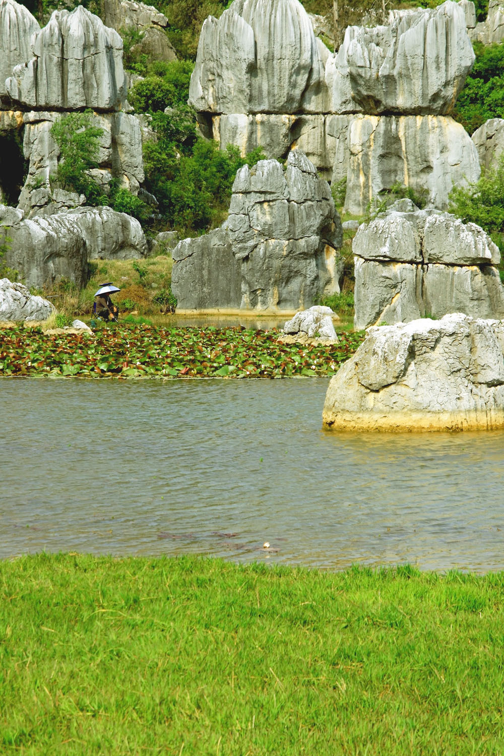 Stone Forest (7)