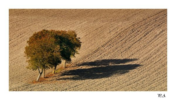 Minimalisme,arbres