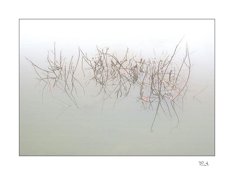Un matin sur la Loire