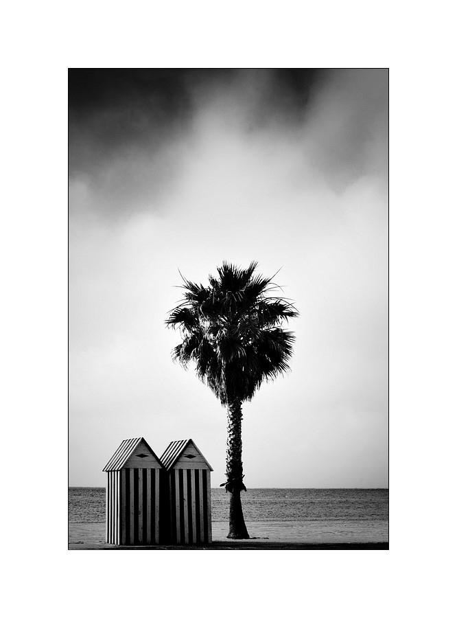 cabines ,plage,palmiers ,Herault, n&b,