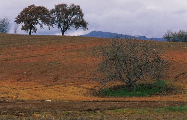 rural landscape Catalonia