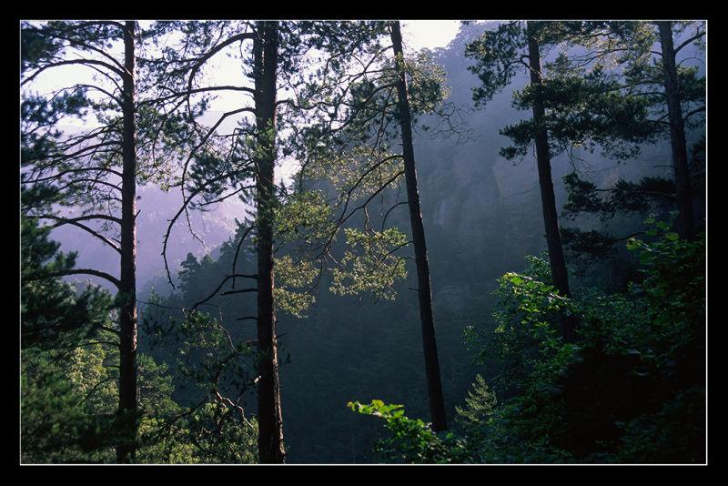 Boscos al Solsonès