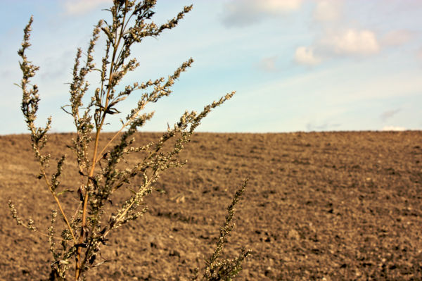A shot of an uncultivated field.