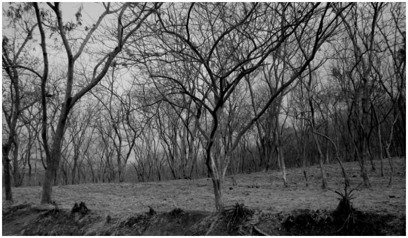 Near the Sula vineyard in Nashik
