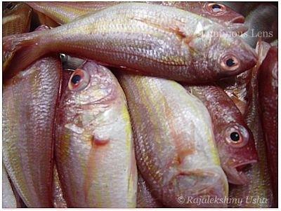 """Golden Fish"""