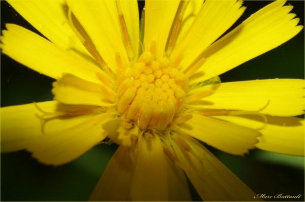 coeur de fleur ............