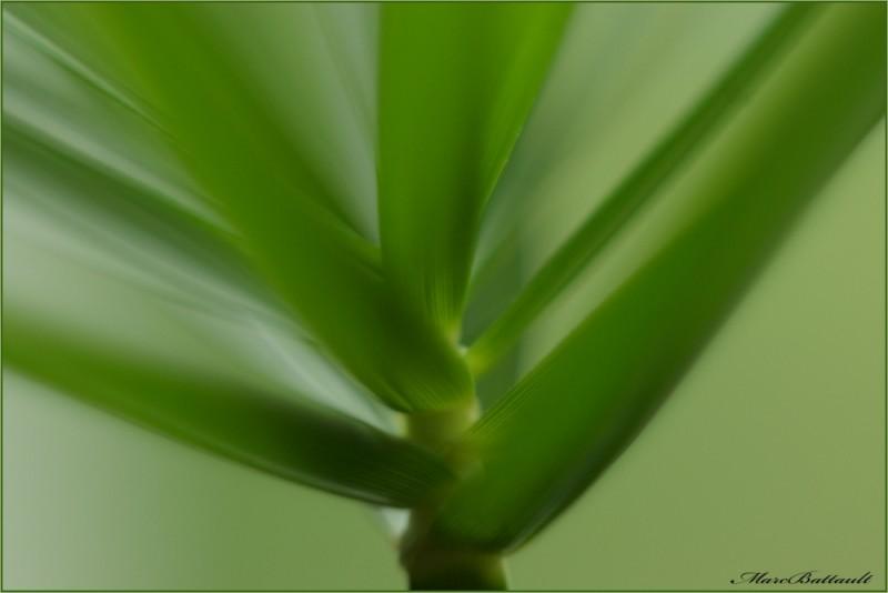 reve en vert..............................