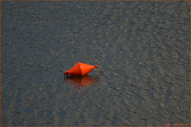 tangerine rescue.........................