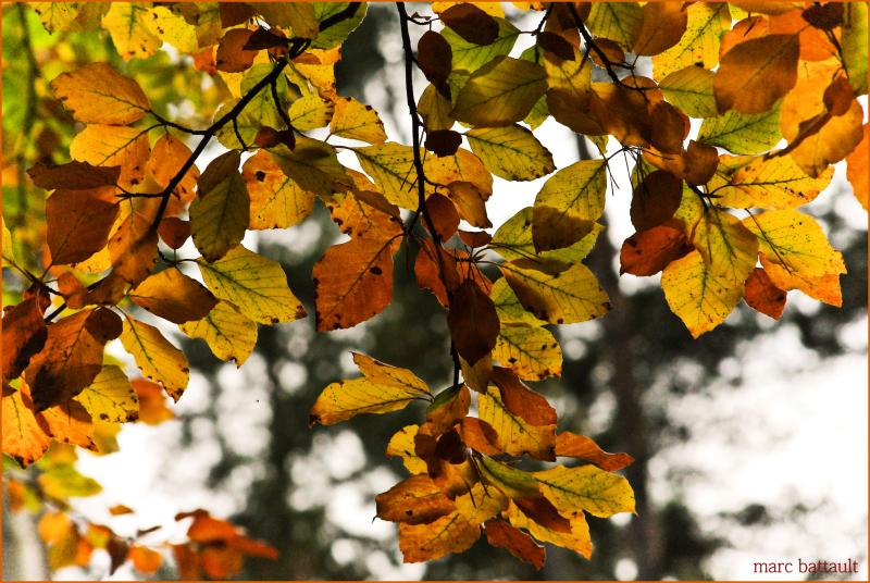 reves d'automne .........................