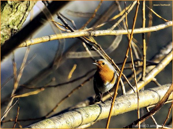 l'oiseau et la melodie ...........................