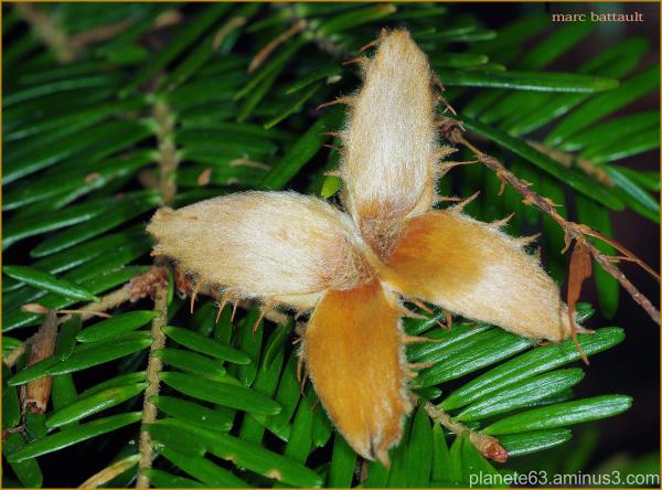 papillon d'automne................................