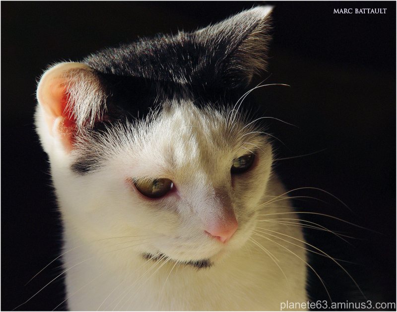 cat woman ...........................