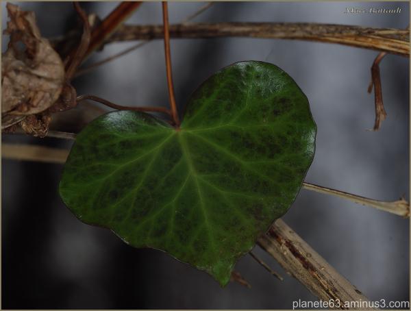 "oh , ""coeur"" de la nature ........................"