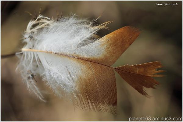 angel dust .......................