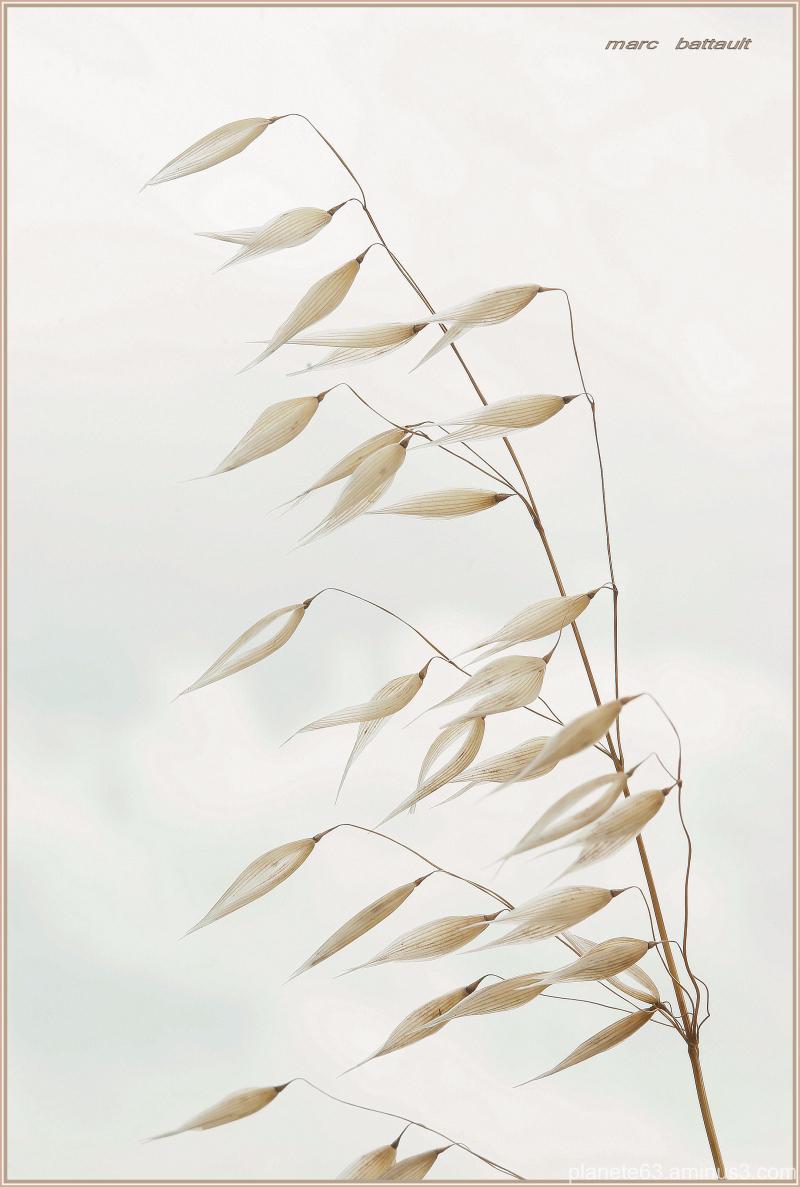 le souffle du vent ............................