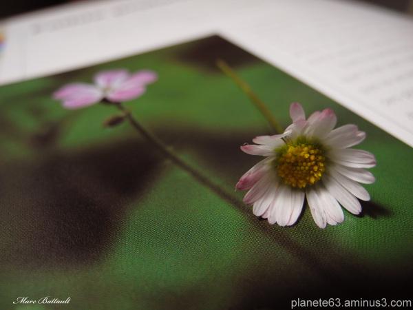 reve de fleur ......................