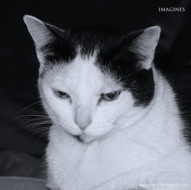 chat va bien ?............................