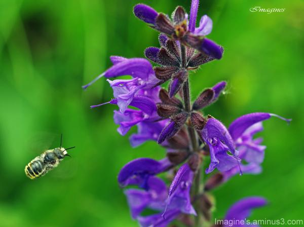 destination nectar ............................