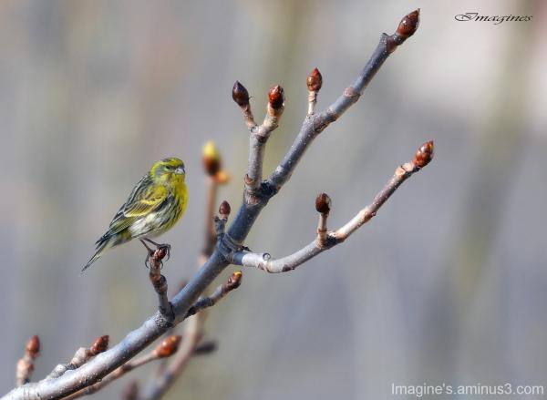 v'la le printemps..........................